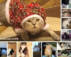 Кошкин день на DFM-Нижнекамск